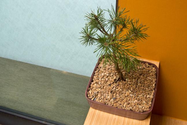 bonsai planter shapecrete the bonsai planters built to last decades forever redwood